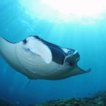 Manta bay- an exquisite paradise of wildlife and fun