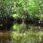 Explore the beautiful natural creations of Nusa Lembongan Mangroves