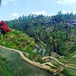 Tegalalang Rice Terrace: The Ultimate Guide to Ubud's Rice Fields